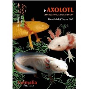 L'axolotl, Ambystoma Mexicanum